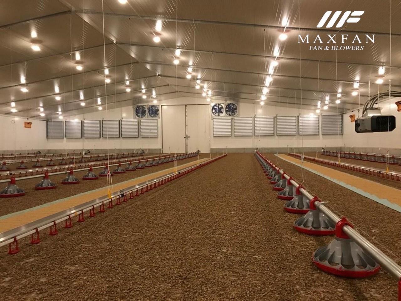 Lắp đặt hệ thống làm mát trại gà