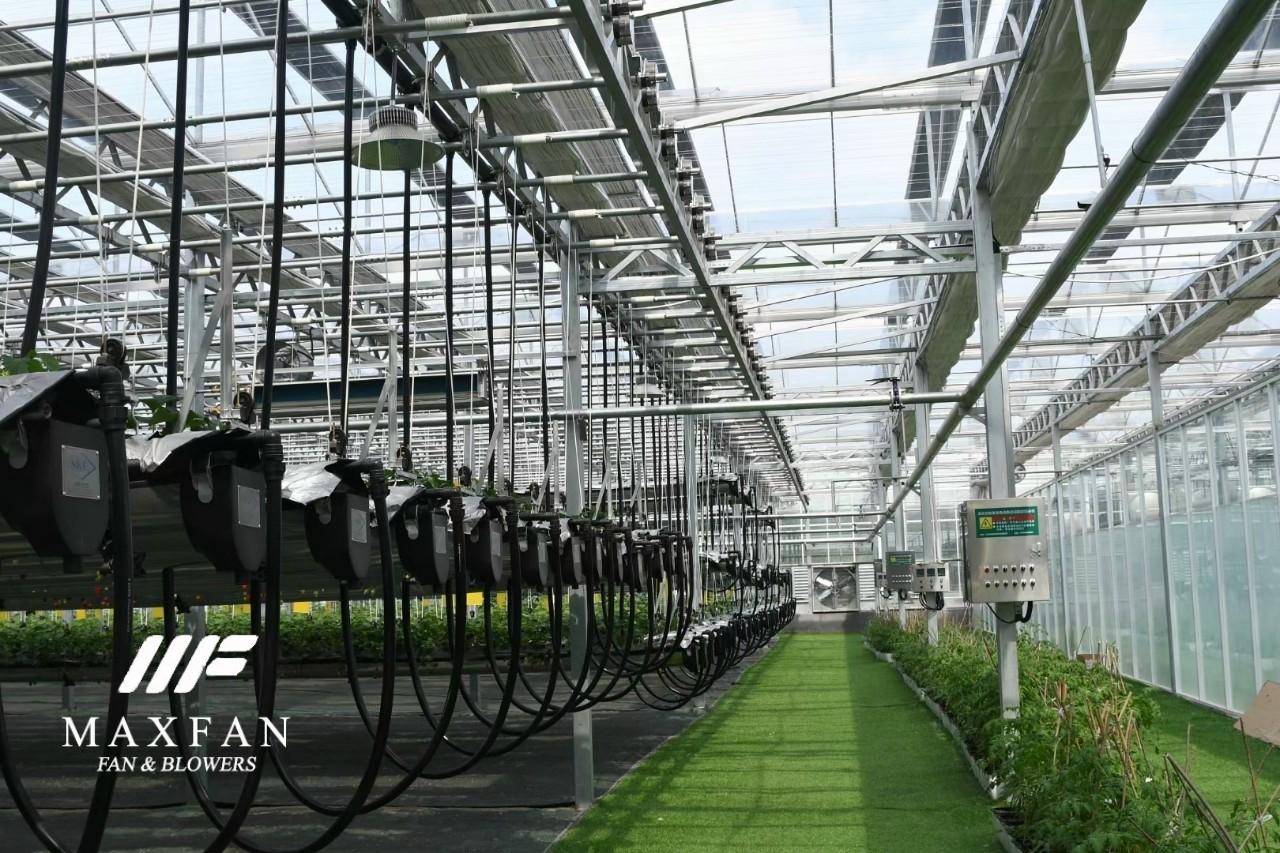Lắp đặt hệ thống làm mát vườn rau